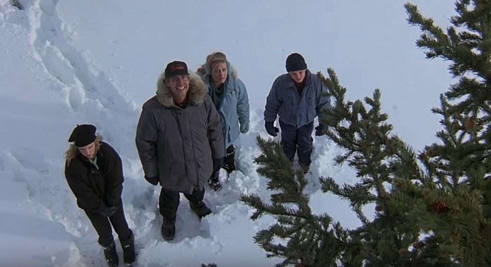 live like the griswolds and cut your own christmas tree in idaho