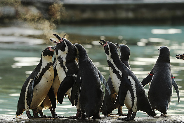 London Zoo Holds Its Annual Stocktake