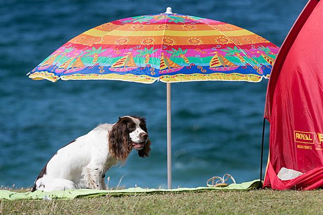 Summer Crowds Enjoy The Surfing In Cornwall